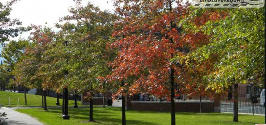 boston_autumn_2010