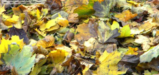 golden_autumn_02