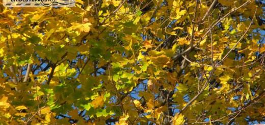 golden_autumn_03