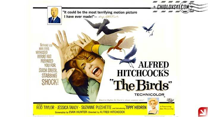 birds-poster-001