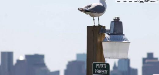 bird-panorama