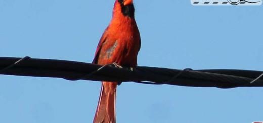 cardinal-visit