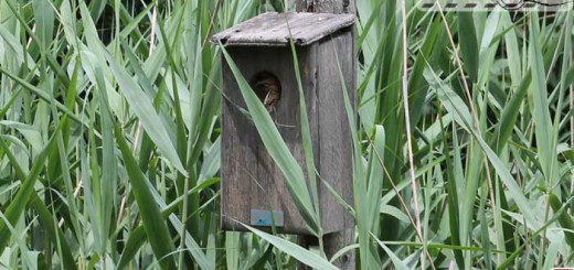 bird-house-001