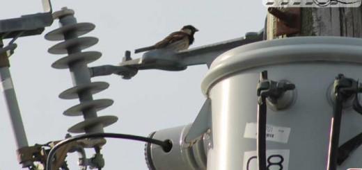 sparrow-madscientist