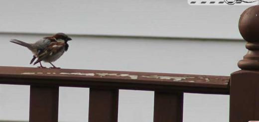 sparrow-porch
