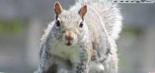 squirrel-000
