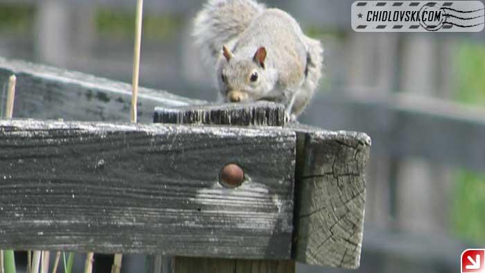 squirrel-002