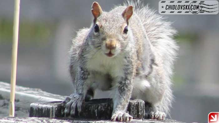 squirrel-004