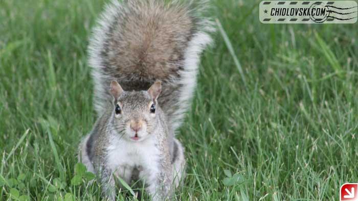 squirrel-007