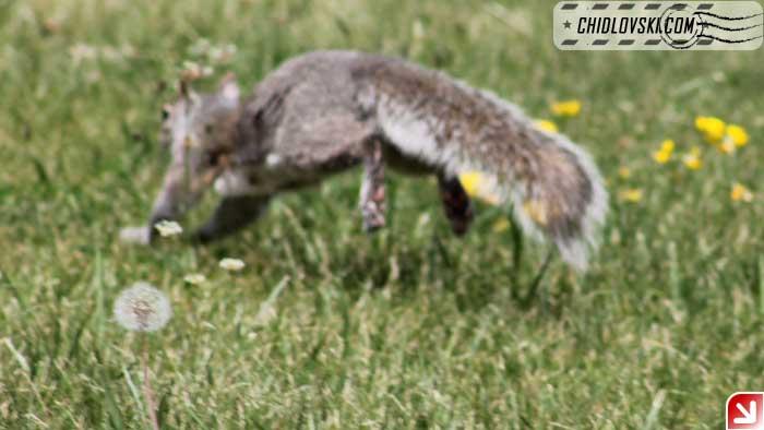 squirrel-009