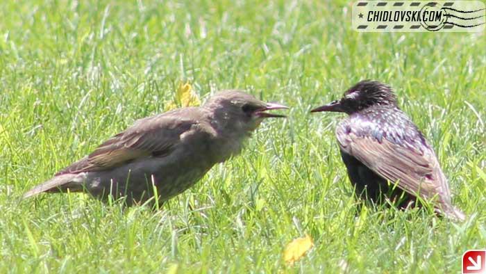 argument-birds