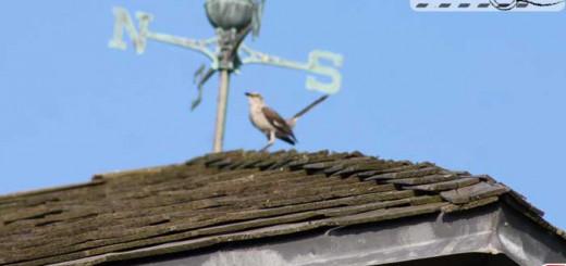 direction-mockingbird
