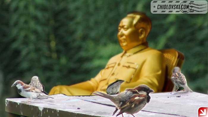mao-n-sparrows
