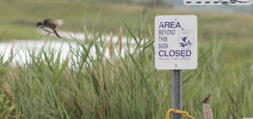 plum-closed-area
