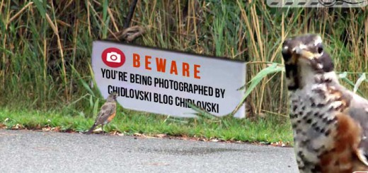 beware-photography