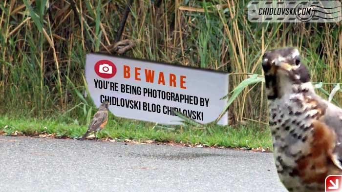 beware-photography