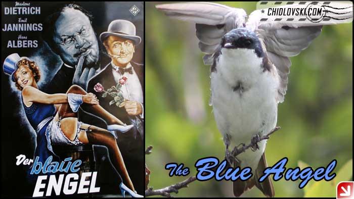 blue-angel-002