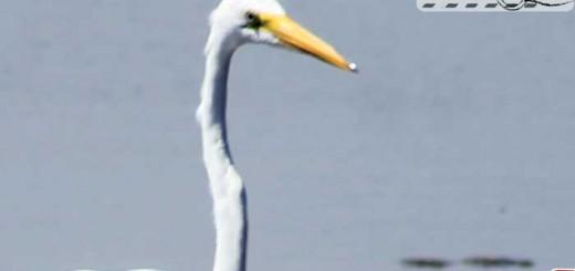 egret-08-01
