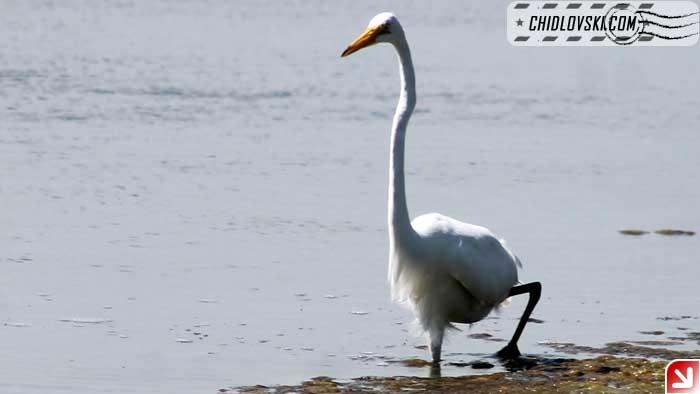 egret-08-02
