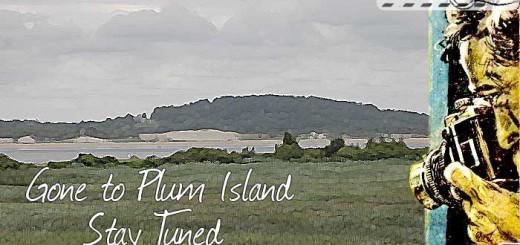 gone-plum-island