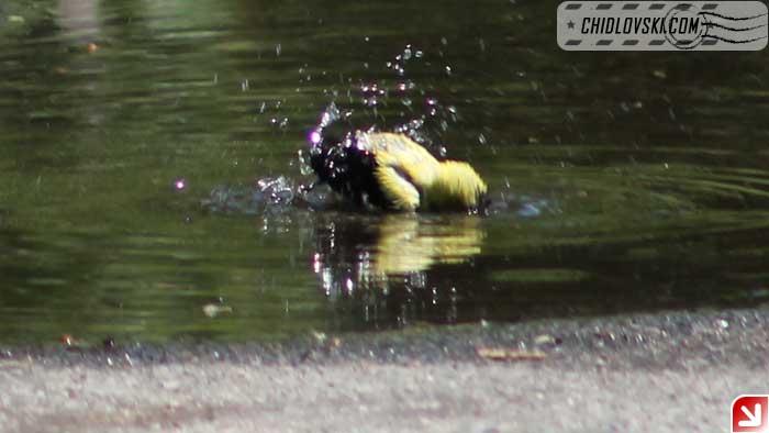 puddle-002
