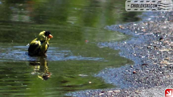 puddle-017