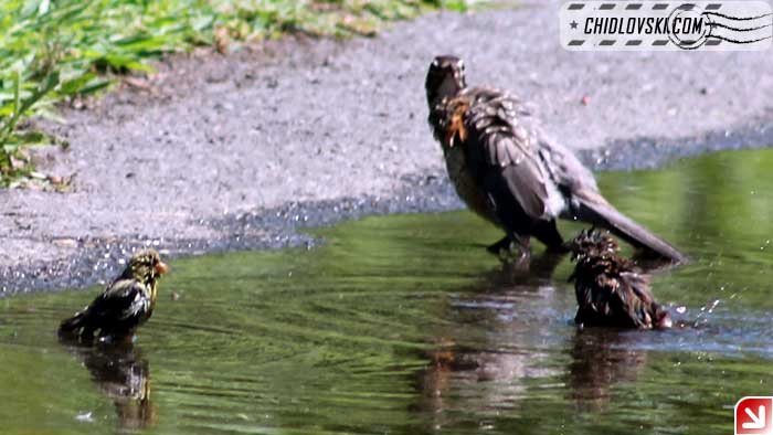 puddle-020