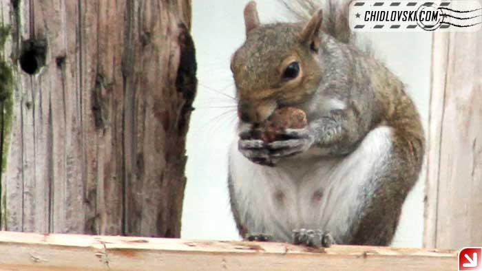 squirrel-08-000