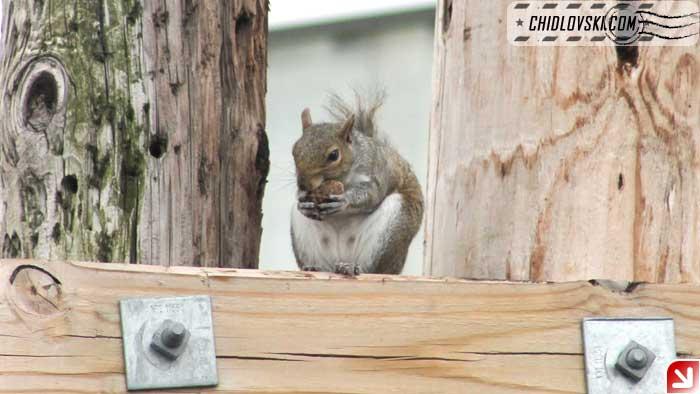 squirrel-08-001