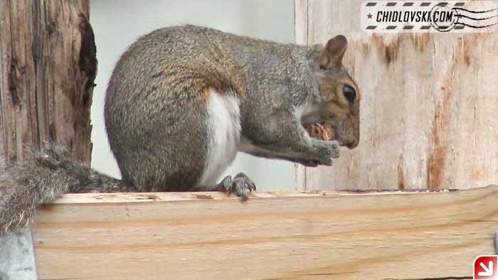 squirrel-08-004