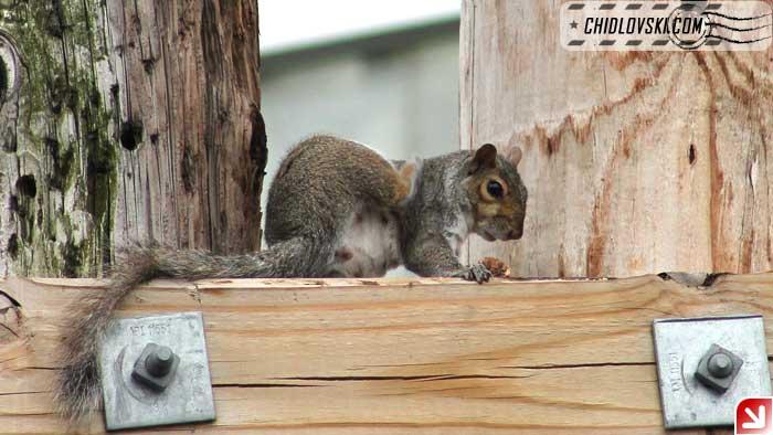 squirrel-08-005