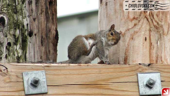 squirrel-08-006