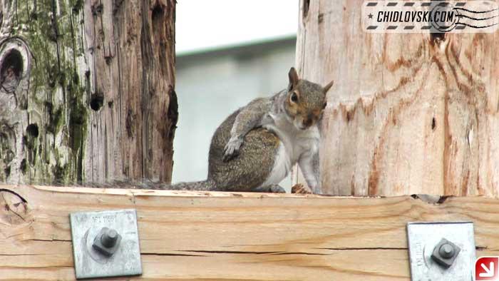 squirrel-08-007