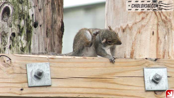 squirrel-08-008