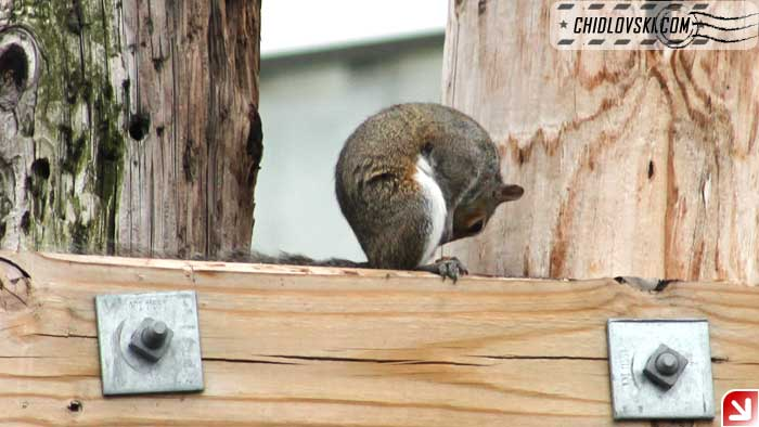 squirrel-08-009