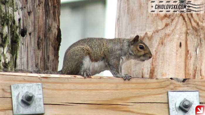 squirrel-08-010