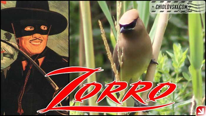 zorro-002