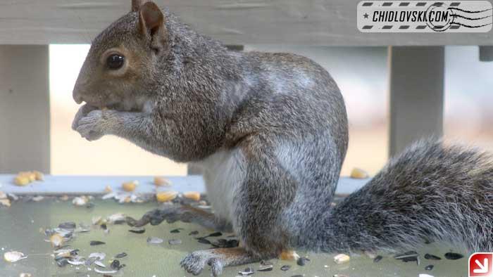 squirrel-09-001