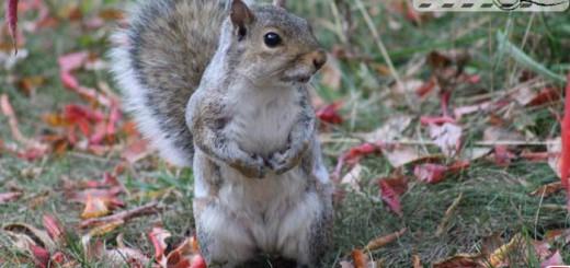 squirrel-10-001
