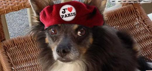bernie-loves-paris