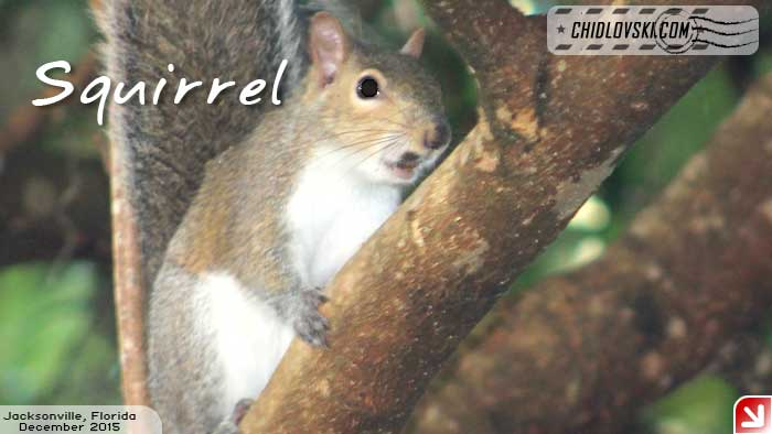 florida-birds-squirrel