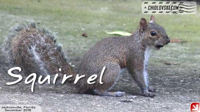 florida-birds-squirrel2