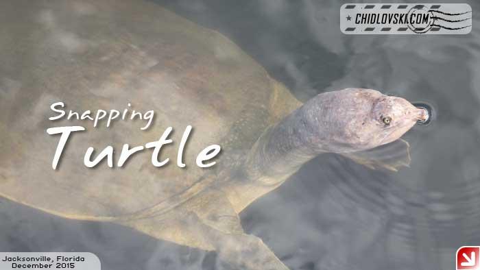 florida-birds-turtles