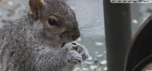 squirrel-delight-01