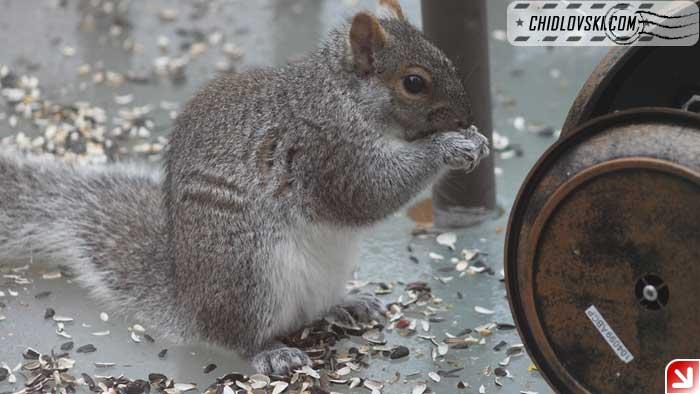 squirrel-delight-02