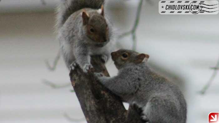 squirrel-delight-03