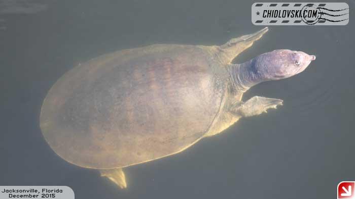 turtle-002