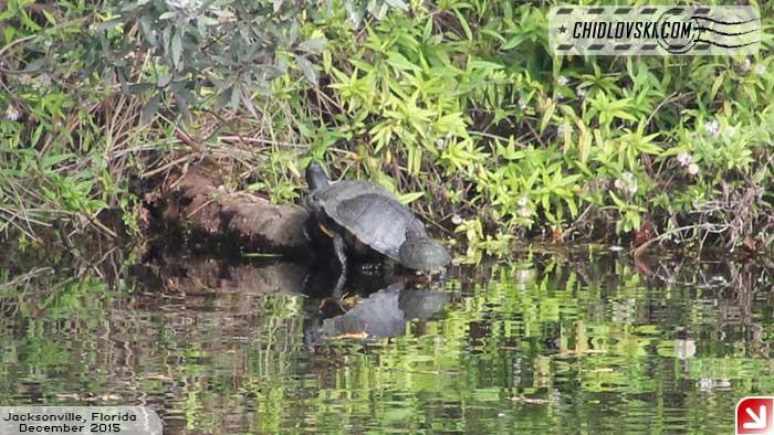 turtle-008