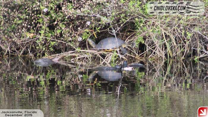 turtle-009