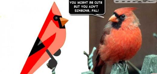 birds-illustrated